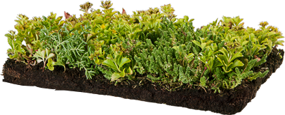 Sedum Roof Systems Green Roof Systems Sky Garden