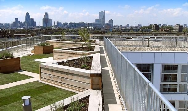 Intensive green roof maintenance