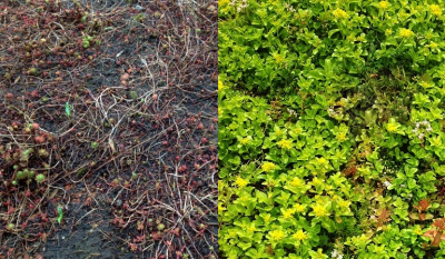 Green Roof Maintenance Packages