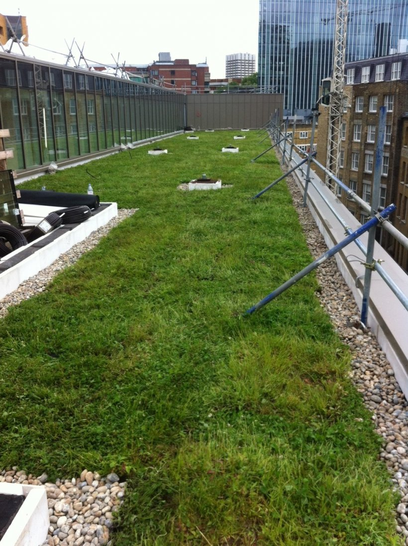 Wildflower Green Roof At Hilton Bankside London Case Study