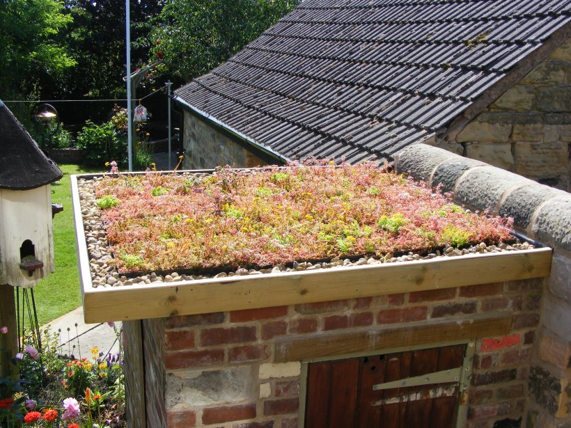Sedum Modular System Green Roof in Derbyshire