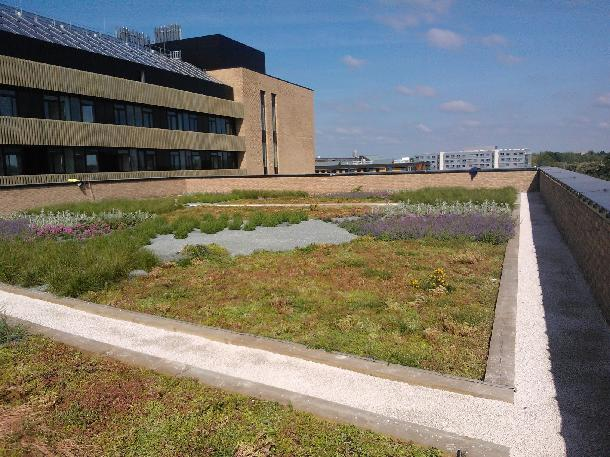 MSM Cambridge - Intensive Green Roof