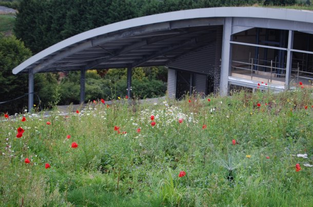 Green Roofs are 'Low-Maintenance' not 'No-Maintenan