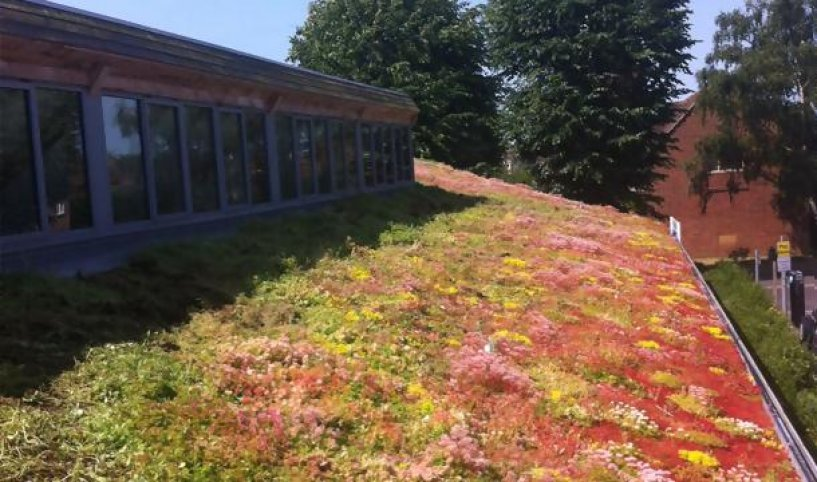 How to maintain a green roof