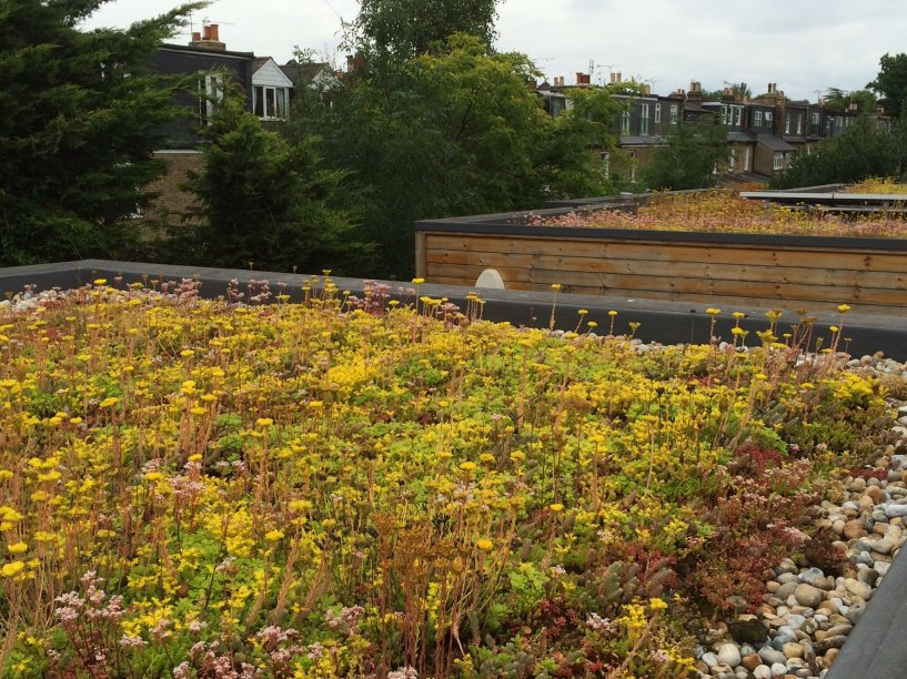 How Much Does a Green Roof Cost Per M2?
