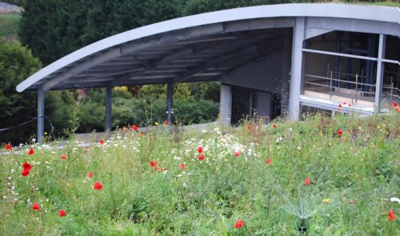 Irrigation for your Green Roof