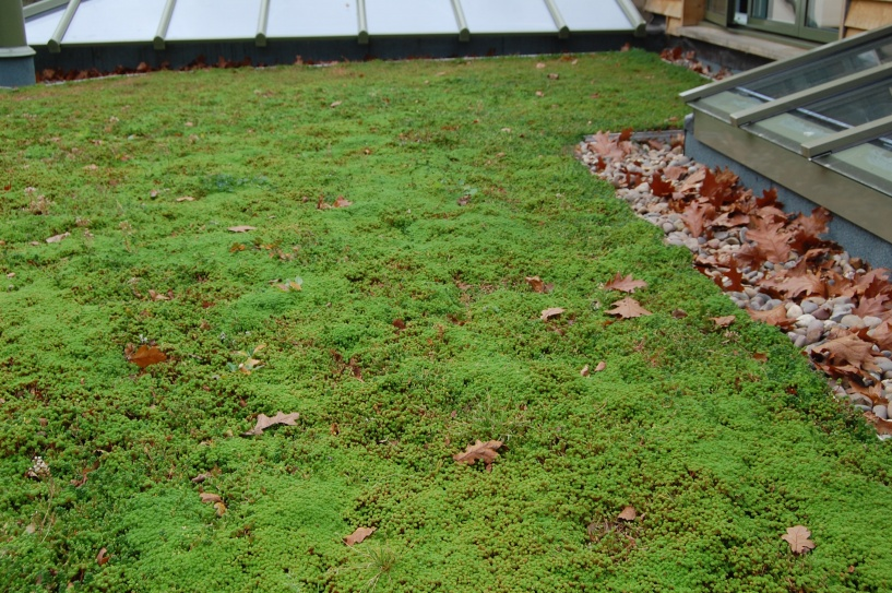 Maintaining a Green Roof